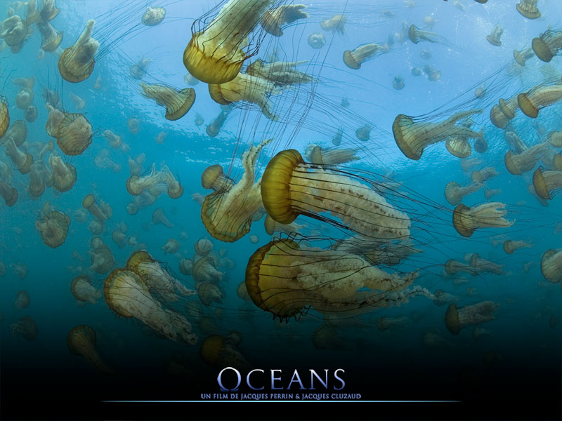 Oceans, an epic adventure for Luc Drion